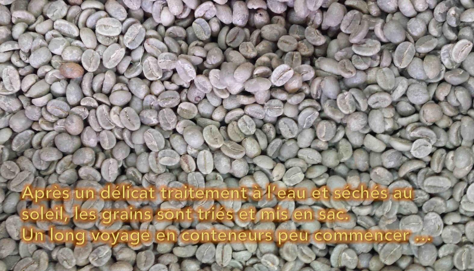 Du café vert à la torréfaction